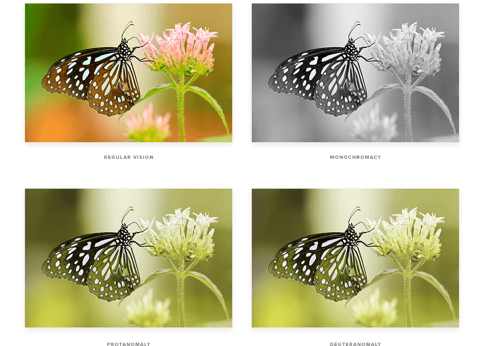 Four images of butterflies with their colours changed to represent colourblindness